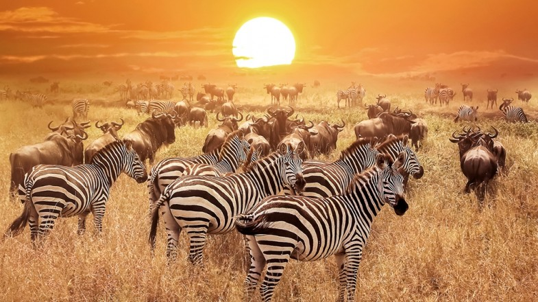 4-Myths-That-You-Can-Dispel-and-Travel-Kenya-Safely